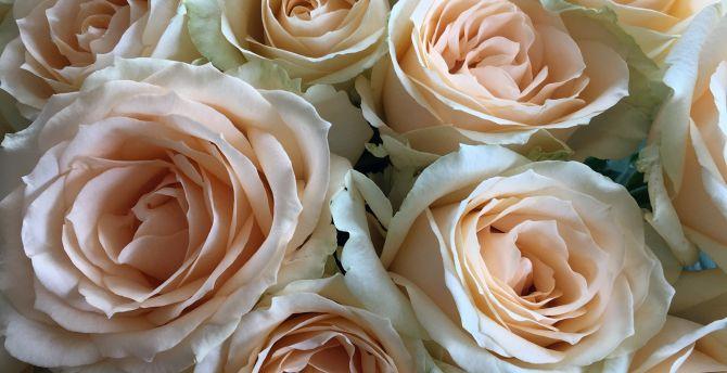 Desktop wallpaper flowers roses white pink bouquet hd image flowers roses white pink bouquet wallpaper mightylinksfo