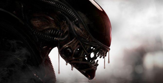 Alien, predator, creature wallpaper