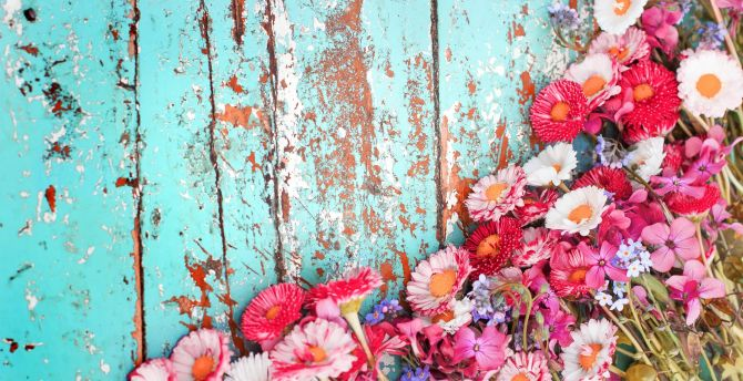 Flowers, white, red and pink flowers wallpaper