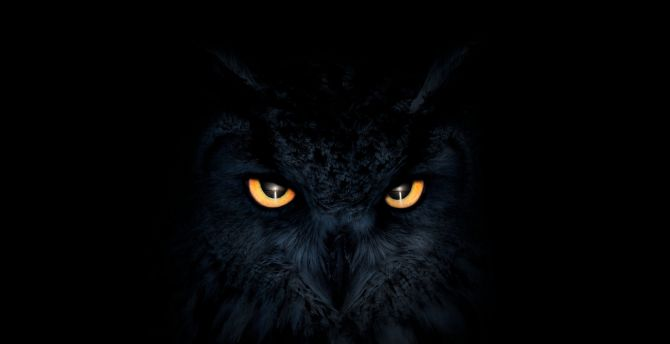 Owl, dark, glowing eyes, muzzle wallpaper