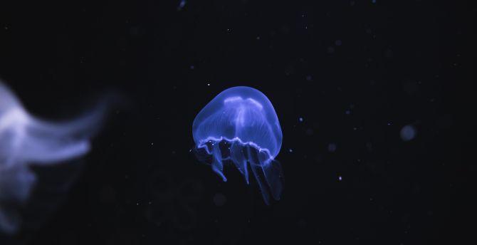 Blue jellyfish underwater fish