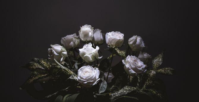 White roses portrait