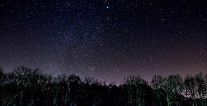 Starry night stars trees