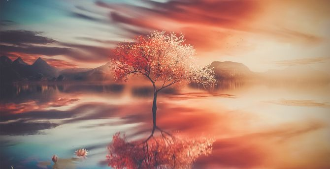 Autumn, tree, sunset, reflections wallpaper