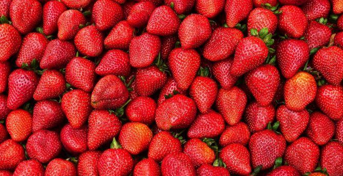 Strawberries, berries, fruit, red wallpaper