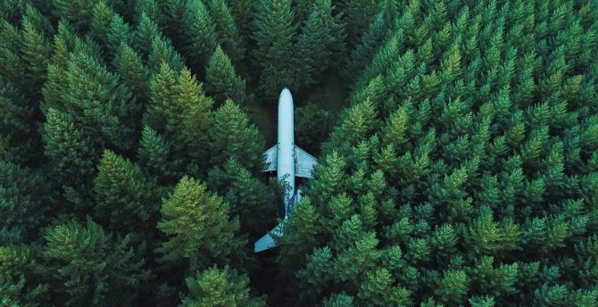 Airplane, aircraft, trees, aerial view wallpaper