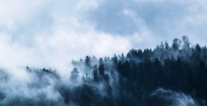 Fog, misty day, forest, horizon wallpaper