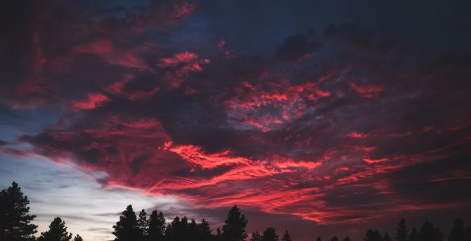 Colorful, clouds, sunset, dark, tree wallpaper