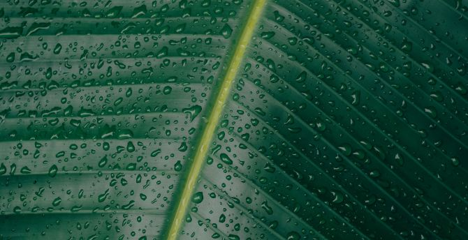 Green leaf big drops water