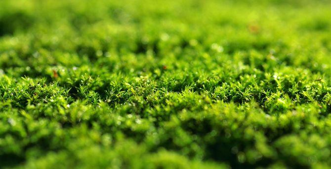 Green grass close up 5k