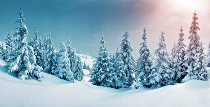 winter, trees, forest, snow, nature wallpaper