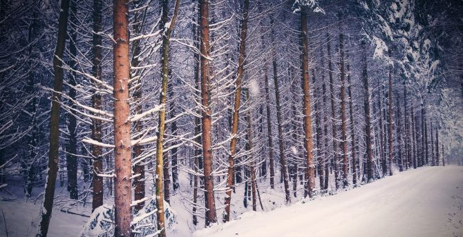 Forest tree nature winter
