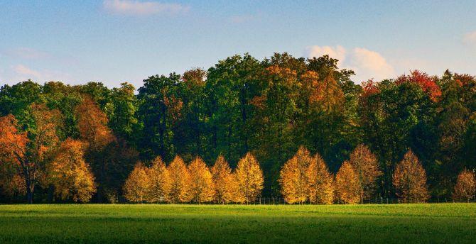 Desktop Wallpaper Autumn Tree Nature Beautiful Sunny Day