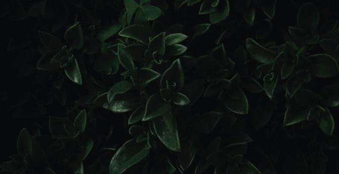 Desktop Wallpaper Green Leaves Close Up Dark Portrait Hd Image