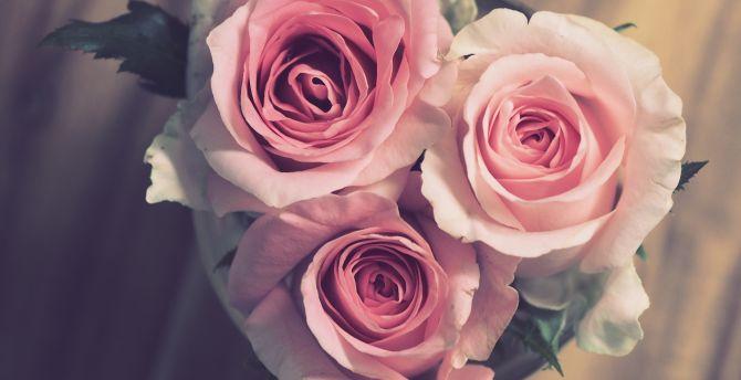 Bouquet, pink roses, bloom wallpaper