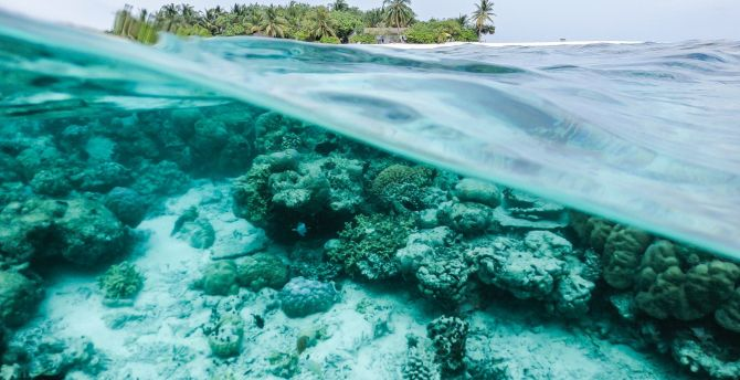 Desktop wallpaper underwater, sea, surface, tropical island, exotic, hd image, picture ...