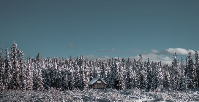 House, winter, tree, landscape, nature wallpaper