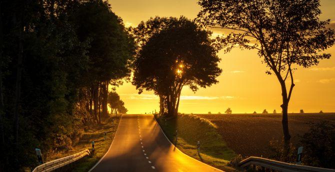 Road, sunset, tree, landscape wallpaper