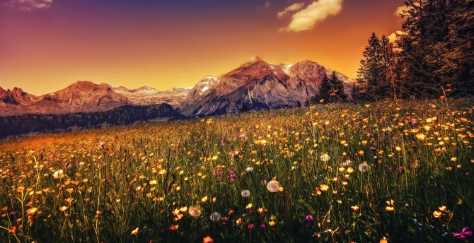 Landscape, plants, mountains, sunset wallpaper