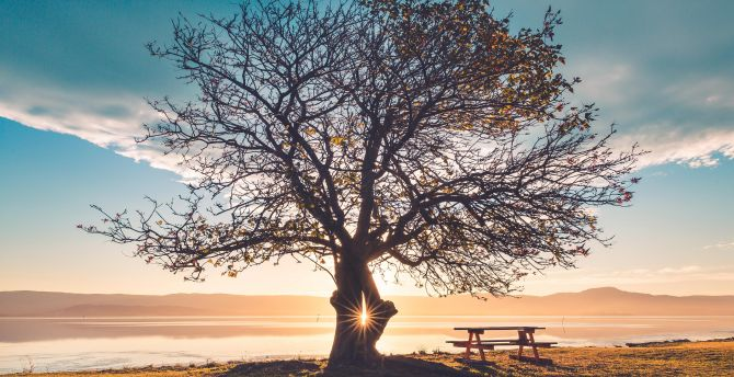 Huge tree, sunbeams, landscape, sunset, bench wallpaper