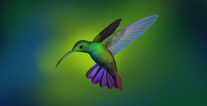Hummingbird Blur Art Flight Wallpaper