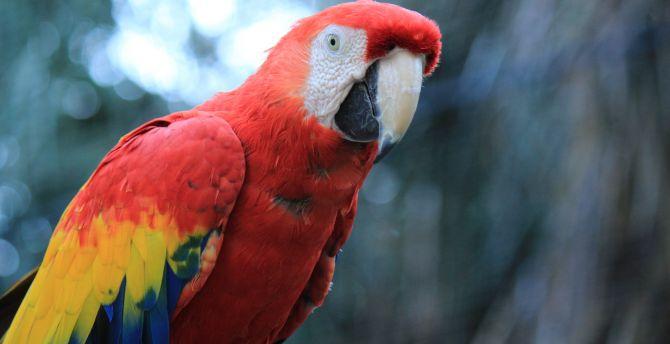 Parrot red macaw bird 4k