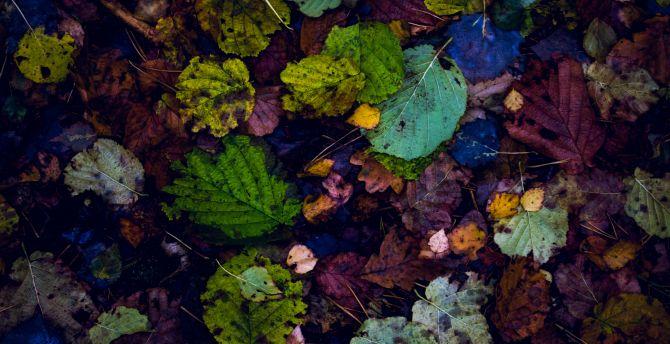 Leaves autumn 5k