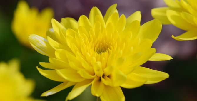 Desktop Wallpaper Yellow Flowers Spring Close Up Hd Image Picture Background F7b117