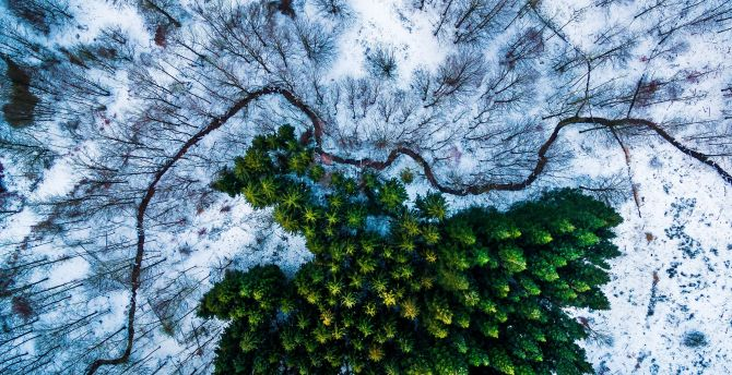 Aerial view tree winter