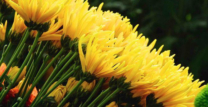 Desktop Wallpaper Yellow Flowers Fresh Hd Image Picture Background Ff5488