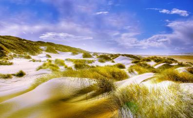 Grass, sand, beach, nature, landscape