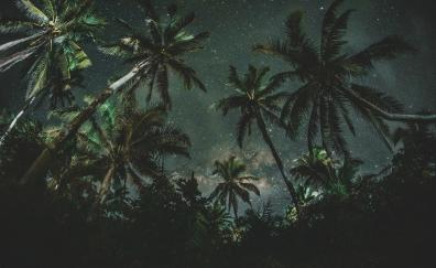 Palm trees, night, starry night, nature