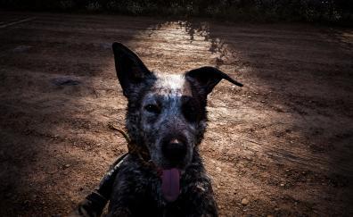 Dog muzzle far cry 5