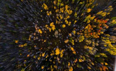 Aerial view forest autumn tree