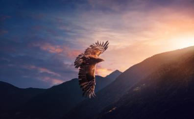 Eagle predator flight
