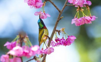 Sunbird colorful flowers