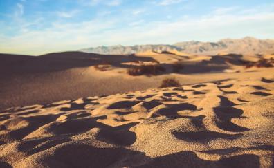 Desert, sand surface, sunny day