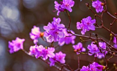 Lilac flowers pink portrait