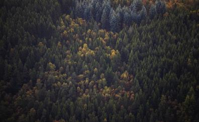 Green trees, forest, aerial view, peaks