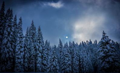 Winter night trees nature