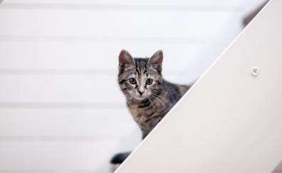 Pet animal feline cat muzzle