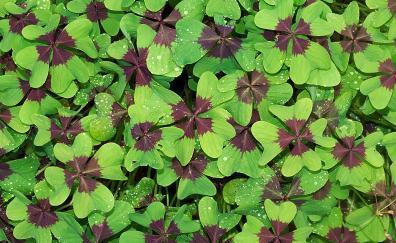 Green brown leaves water drops