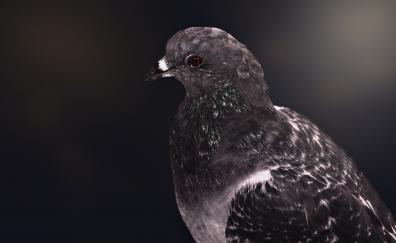 Love bird dove portrait