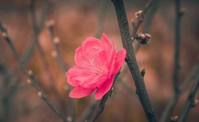 Flower bloosom tree branch