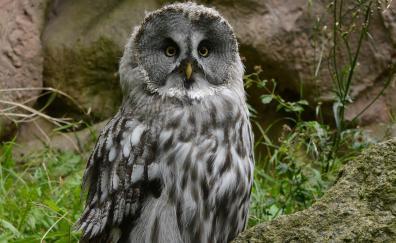 Cute predator owl bird