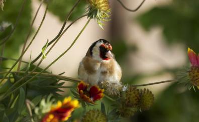 European goldfinch, tree branches, bird