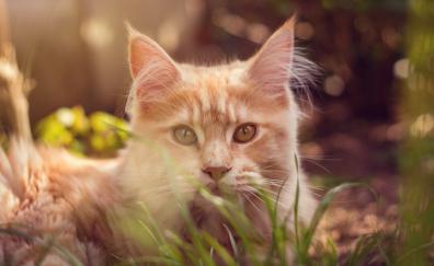 Cat behind grass cute