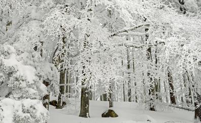 Forest tree winter snowfall 4k
