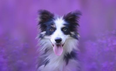 Dog muzzle portrait