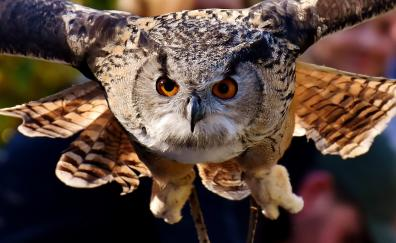 Owl muzzle flight bird